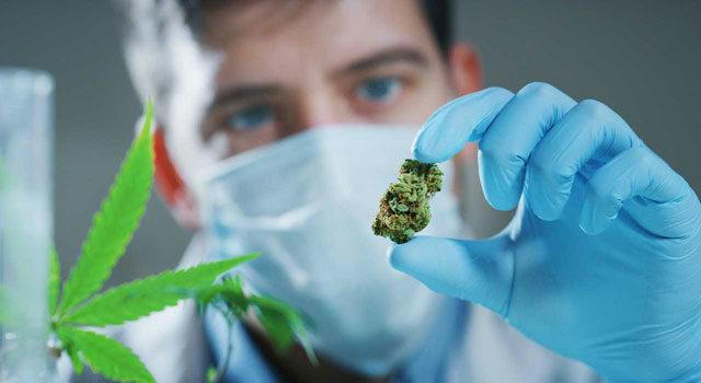 konopie analiza laboratorium profil kanabinoidy terpeny thc cbd analiza konopi